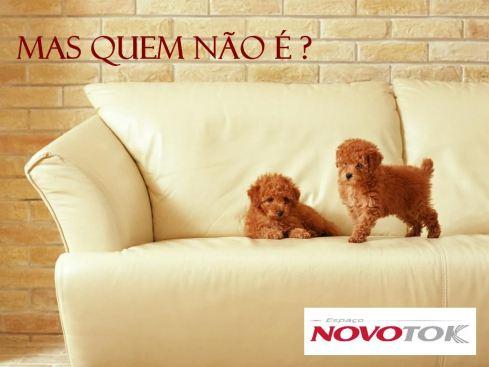 Cachorrinhos no sofá - NovoTok