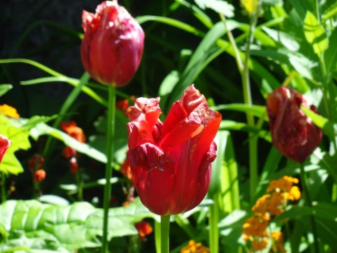 Jardins de Monet - Giverny