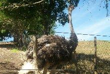 Zoo - Boa Luz (arquivo pessoal da Luana)