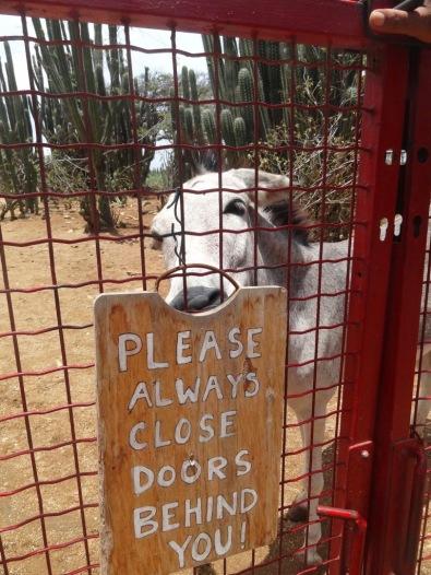 Donkey Sanctuary - ARUBA