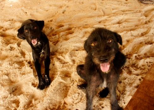 Charlô e Charlotte - Praia do Carro Quebrado - ALAGOAS