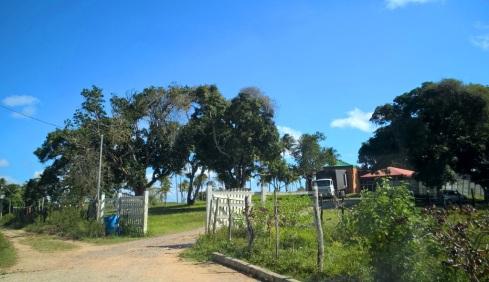 CHIOZINHO - Povoado Cedro - SERGIPE