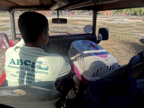 Transporte de buggy - Coqueiro - Mangue Seco - BAHIA - BRASIL