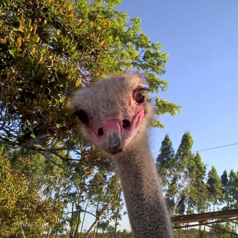 avestruz-parque-timbo-blogmisscheck-in