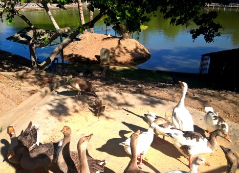 patos-do-parque-timbo-blog-miss-check-in