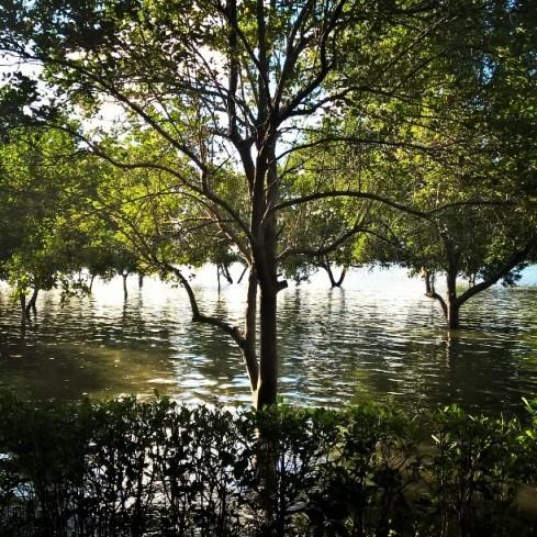resort-recanto-da-natureza-mangue-seco-foto-do-ig-misscheck